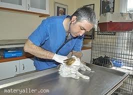 Hayvan Yetiştiriciliği Ve Sağlığı Teknikeri
