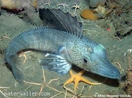 Kutuplarda bulunan buzlu denizlerdeki balıklar donmadan nasıl yaşar?