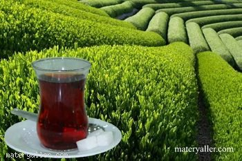 Çayı ilk kim keşfetti? kim buldu?