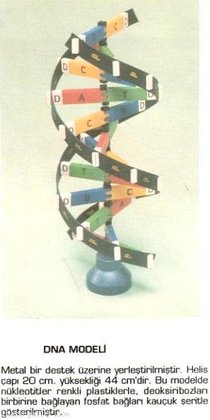 DNA Molekülünün İncelenmesi