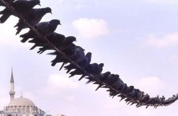 Elektrik tellerine konan kuşlar niçin çarpılmazlar?