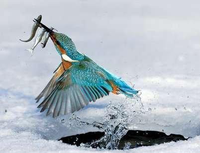 Emircik kuşunun ilginçlikleri