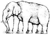 Kaç ayaklı fil?