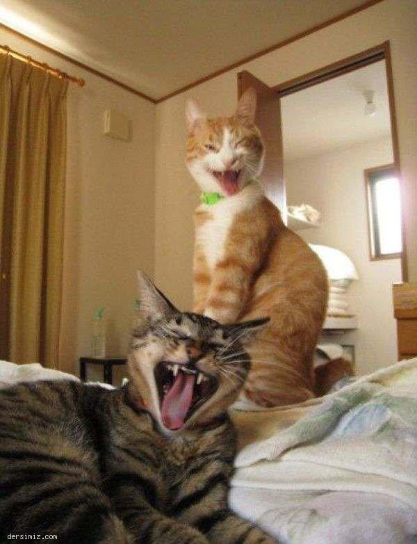 Komik ve İlginç Fotoğraflar