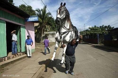 Hep atlar insan taşıyacak değil ya