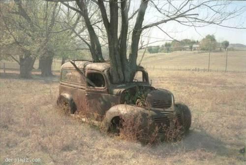 Doğa sever araba